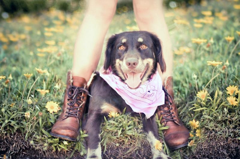 Бандана для собаки